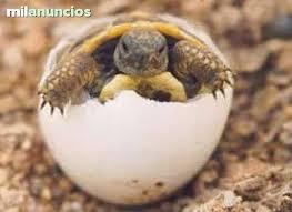 tortuga de tierra 2