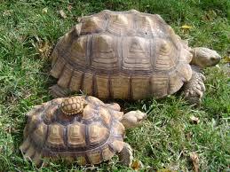tortuga gigante 3