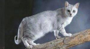 gato burnilla 2