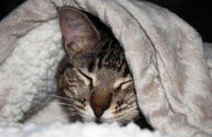 gato-desnutrido-manta