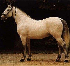 caballo caspio 2