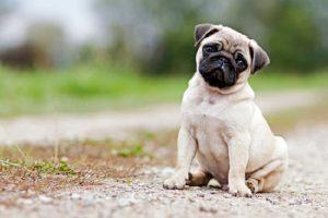 Perros pequeños y cariñosos